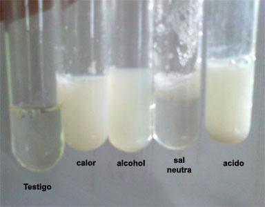 Desnaturalizacion de proteinas