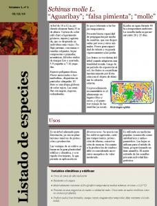 """Comenzamos a actualizar nuestro blog con un listado de las especies con las que trabajamos: hoy le toca a Schinus molle L """"Aguaribay""""; """"Falsa pimienta"""" ; """"Molle"""""""